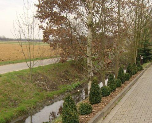 BETONZAUN KOWALEWSKI - Bepflanzung eines Flußrandes